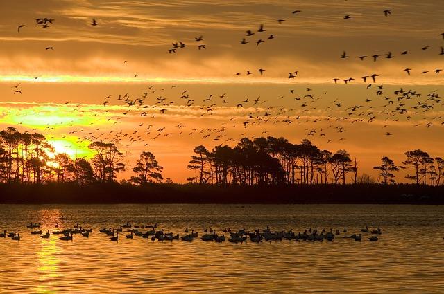birds sunset
